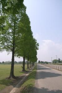 武蔵丘陵森林公園自転車道路
